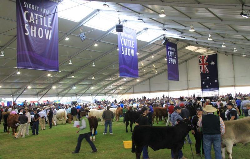 50m Structure Cattle Show, Pattis Hire